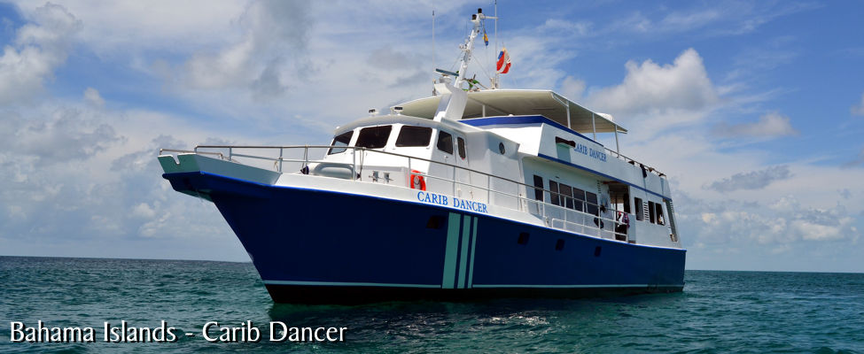 dive bahamas indo aggressor luxury liveaboard. Black Bedroom Furniture Sets. Home Design Ideas
